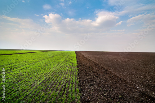 Cuadros en Lienzo experimental planting of cereals and arable land in early spring
