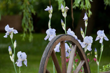 French Purple Garden Lilies & Wagon Wheel Ornament