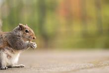 Portrait Of A Cute Squirrel Wi...
