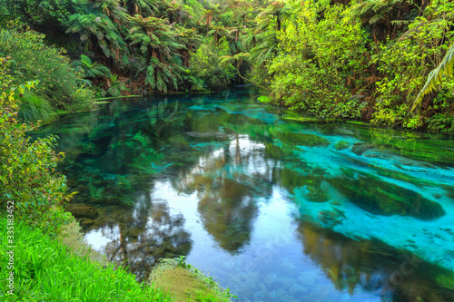 Fototapety, obrazy: The Blue Spring, a scenic attraction at Te Waihou in the Waikato Region, New Zealand. Native Trees reflected in the crystal clear water