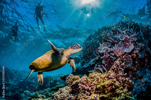 Photo Diver swimming with a green sea turtle in the wild, among colorful coral reef