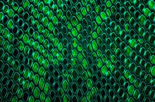 Snake Skin Background. Green Color.