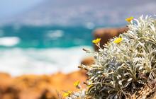 Bright Yellow Coastal Flowers ...
