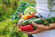 Man Farmer With Homemade Vegetables In His Hands. Selective Focus.