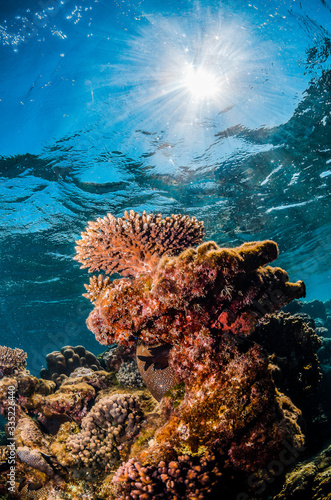 Underwater shot of colorful coral reef in clear blue water