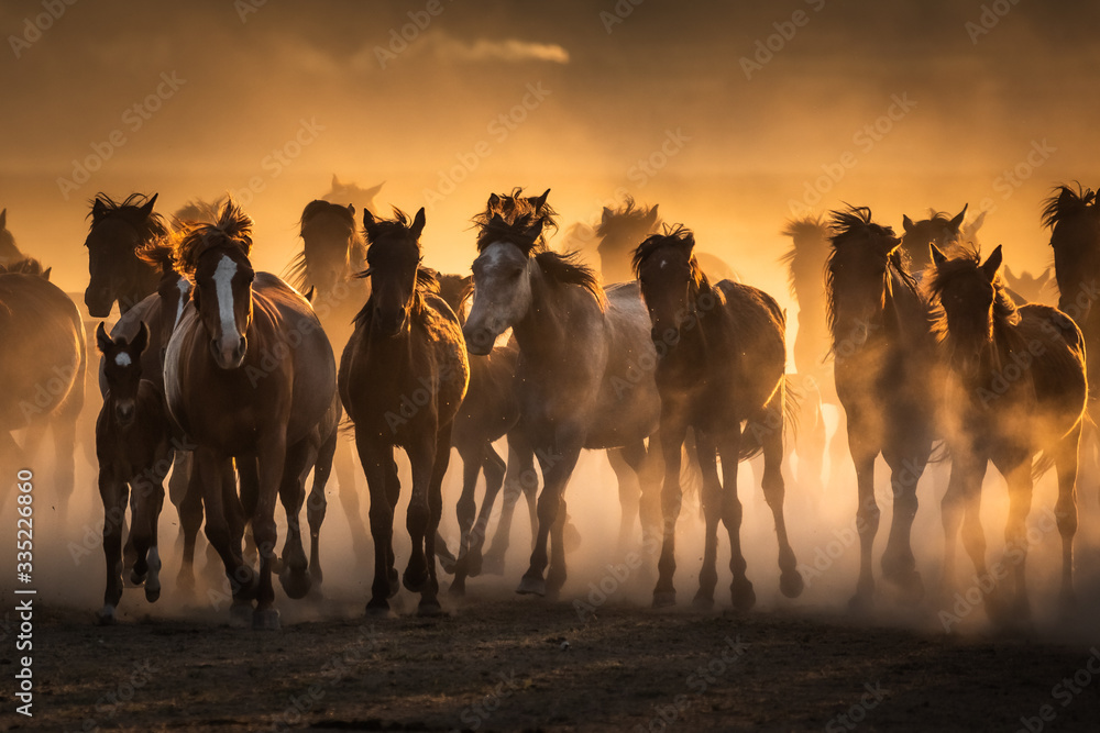 Fototapeta Free horses, left to nature at sunset. Cappadocia, Turkey
