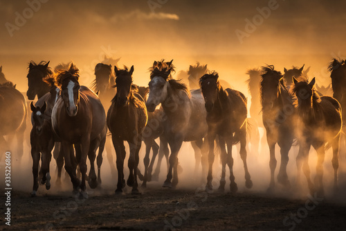 Foto Free horses, left to nature at sunset. Cappadocia, Turkey