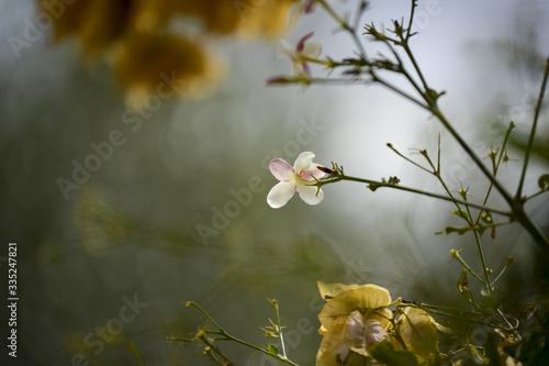 Photo Fleurs de jasmin dans un jardin
