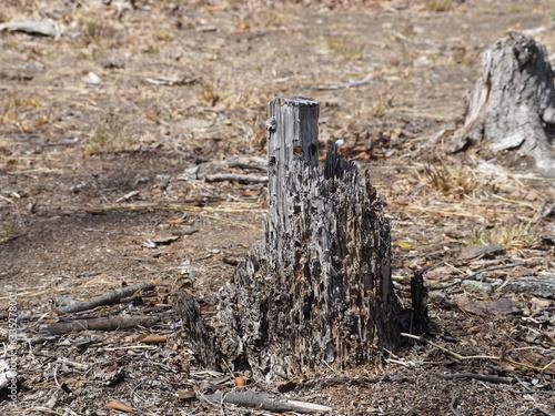 荒地の朽ちた木の切り株 Canvas-taulu