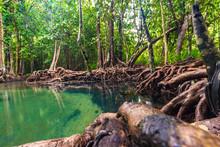 Ecosystem Mangrove Tropical Fo...
