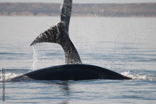 Photo Avistando ballenas