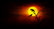 Silhouette Of Two Crows With S...