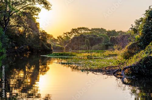 Pantanal landscape Slika na platnu