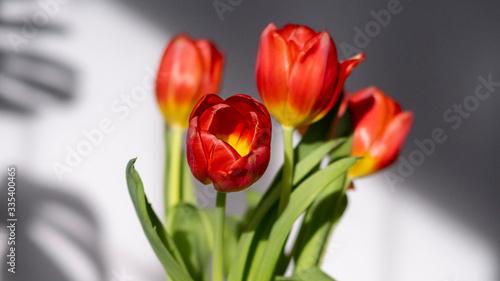 Obraz Tulipan w bukiecie pięknie oświetlony - fototapety do salonu