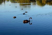 Lake Monger Reserve