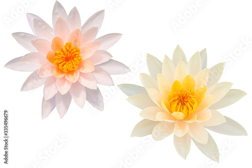 Beautiful Pink lotus flower bouquet isolated on the white background Wallpaper Mural