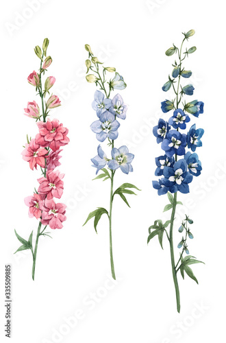Beautiful watercolor floral set with pink, white and blue delphinium flowers Fototapet