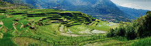 Rice Field Terraces In The Are...