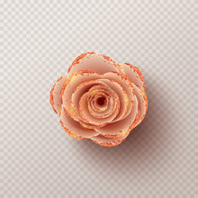 Paper Flower Isolated On Check...