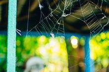 Cobweb With Spider