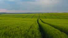 Picturesque Summer Farmland La...