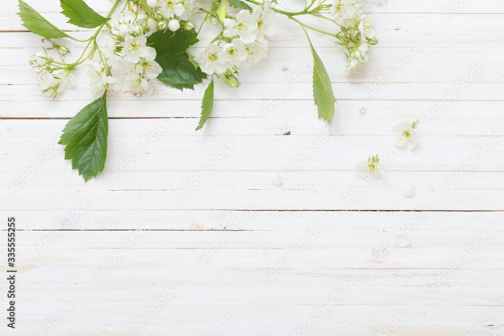 Fototapeta spring flowers on white wooden background