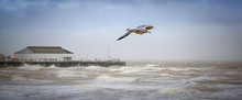 Seagull Flying Over The Stormy...