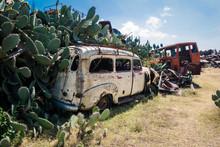 Flowering Green Cactus Near The Crushed Army Cars On The Tank Graveyard In Asmara, Eritrea