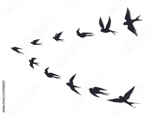Fotografía Flying birds flock silhouette