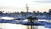 Blue Hour In A Frozen Swamps L...