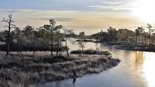 Sunrise In A Frozen Swamps Lan...