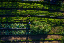Organic Farm In A Quilombola C...