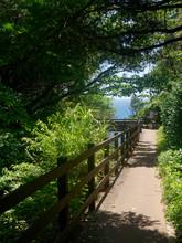 Hiking Footpath Next To The Ta...
