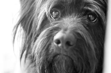 Pies czarno białe