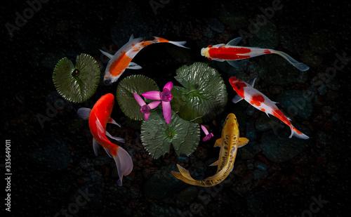 Fotografija Koi fish pond with lotus flowers