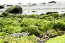 Algae On The Beach