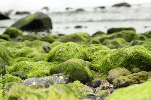 Photo algae on the beach