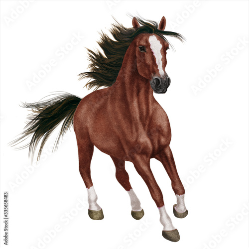 cheval, animal, étalon, brun, isolé, mammifère, ferme, nature, chevalin, blanc, Wallpaper Mural