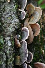 Fungi On Old Log II