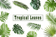 canvas print picture - Set of different tropical leaves on white background