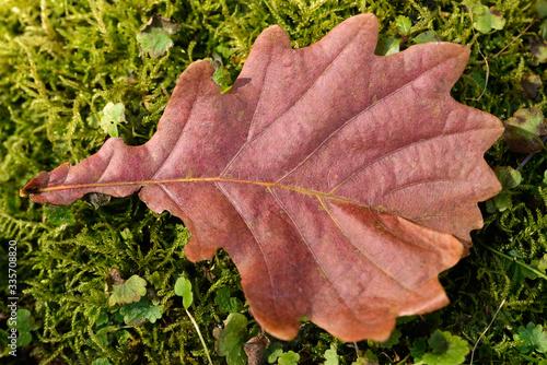 Photo Fallen autumn leaf