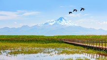 Beautiful Landscape And Sultanmarshes (bird Paradise) Next To Erciyes Mountain With Migratory Birds     - Kayseri, Turkey