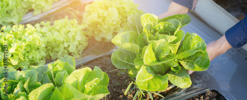 Fototapeta Closeup hands young man farmer checking and holding fresh organic vegetable in hydroponic farm, produce and cultivation green cos for harvest agriculture, healthy food concept, banner website. obraz
