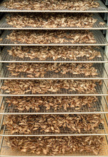 Dried Crickets (Acheta Domesti...