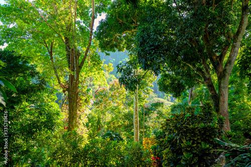 Amazing tropical vegetation, Artemisa, Cuba Fototapet