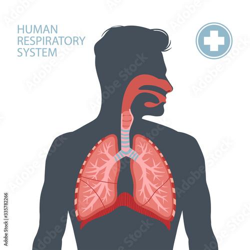 Obraz Human respiratory system - fototapety do salonu