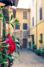Flower In A Window
