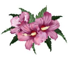 Pink Hibiscus Flowers, Vector ...