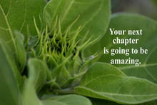 Inspirational Quote - Your Nex...