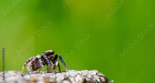 petite araignée Canvas Print